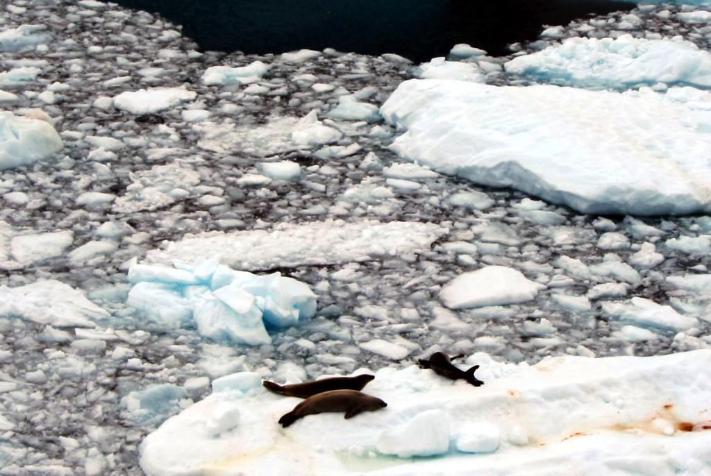 антарктика15