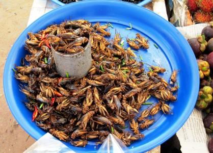 Cambodia Fried crickets