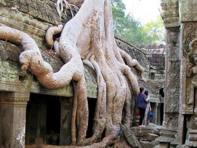 Cambodia Ta Prohm 31