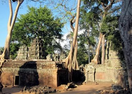 Cambodia Ta Prohm 37