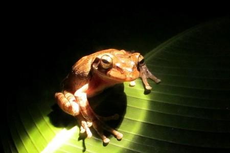 Costa Rica Monteverde, Frog pond 3
