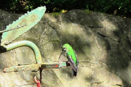 Costa Rica Monteverde, Selvatura Park, Hanging bridges 47