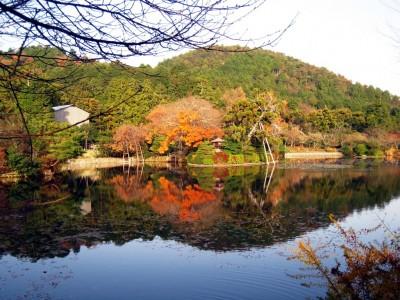 Japan Garden 9
