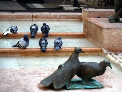 Padua, Pigeons 1