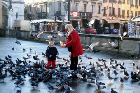 Padua, Pigeons