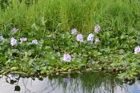Inle Lake 16-1